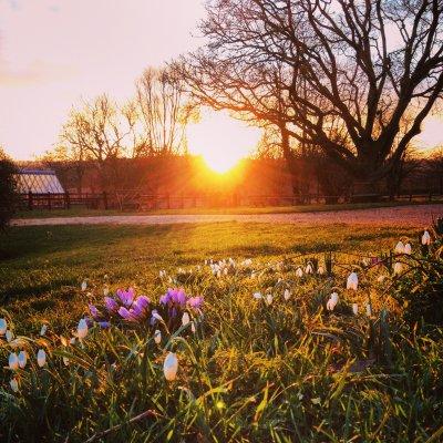 Spring sunshine lights up the crocuses.