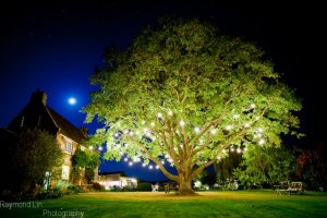 The walnut tree lights up the gardens.